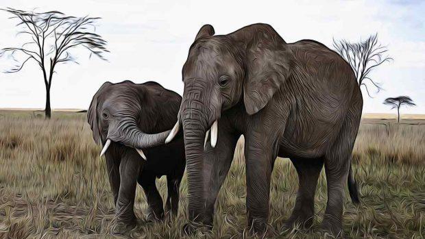Elefantes y su personalidad