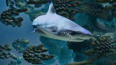 Los tiburones, animales con temperamento