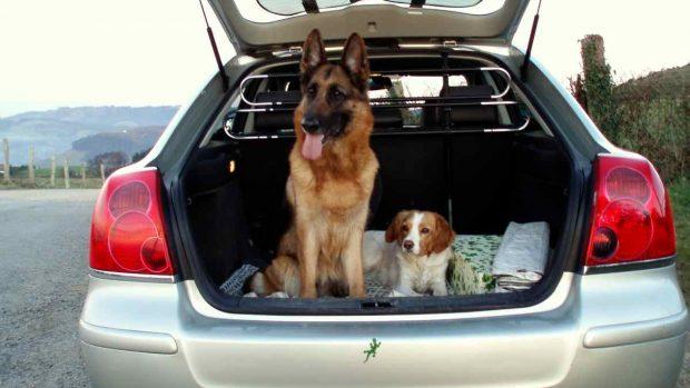 Perros en maletero coche