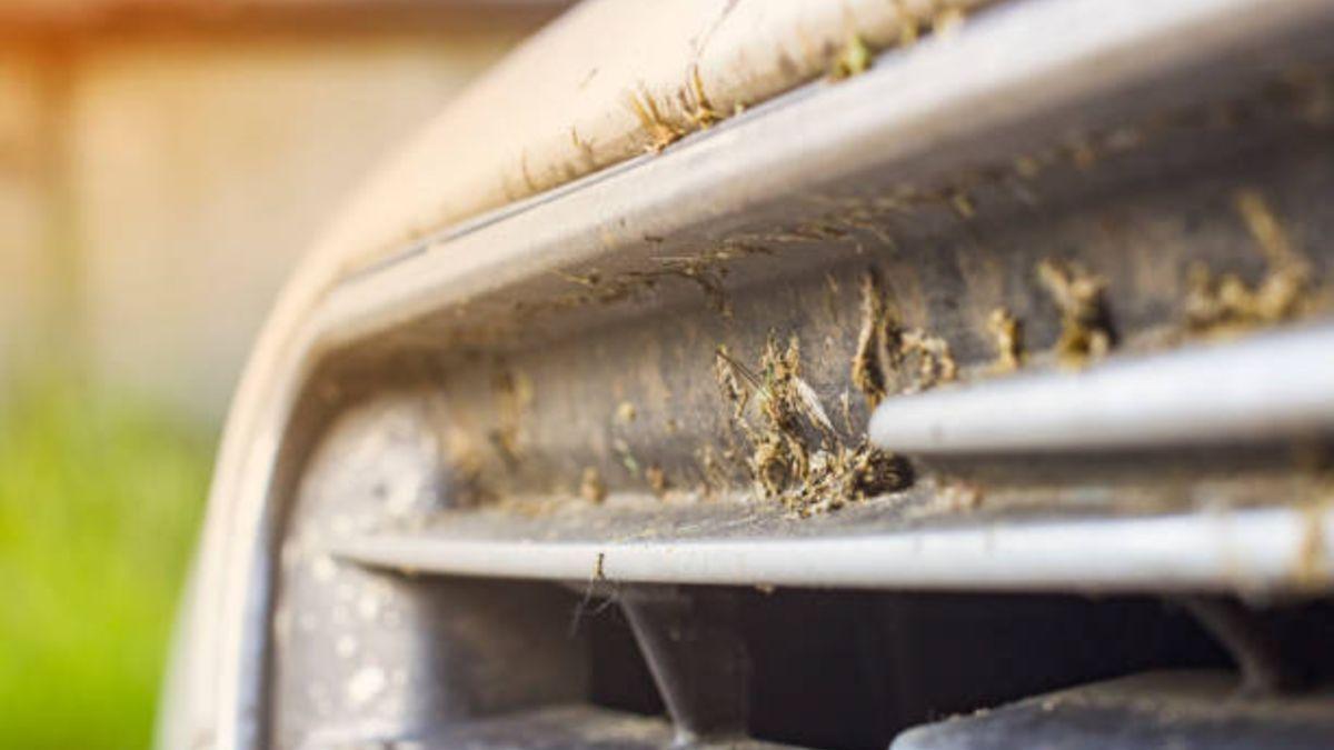 Pautas para eliminar los mosquitos del coche de forma fácil