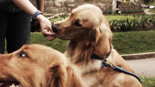 Golosinas para tu mascota