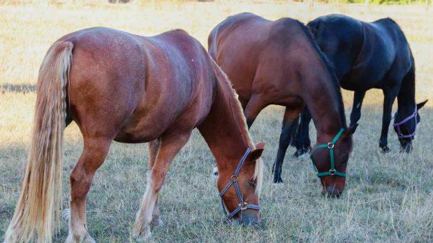Nutrientes para tu caballo