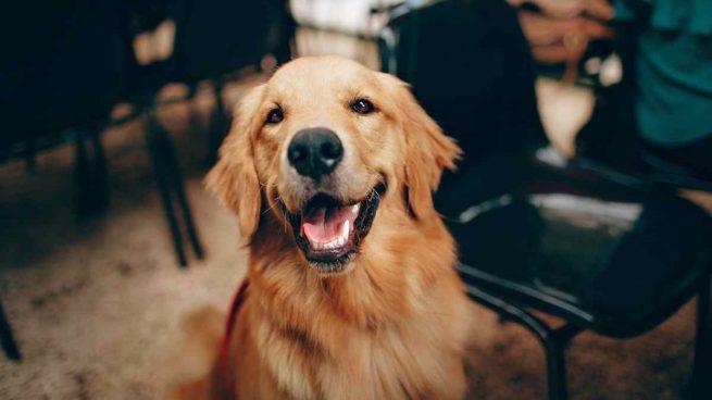 Omega 6 para tu perro