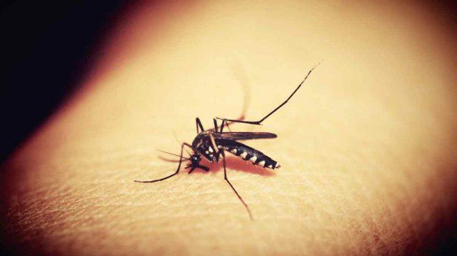 Protégete de los mosquitos
