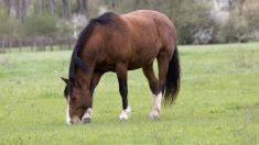 Cádiz, Huelva y Sevilla tienen ¡19 caballos contagiados por el Virus del Nilo!