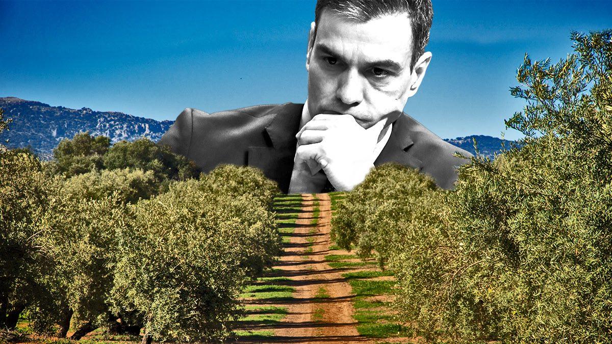 La pasividad de Sánchez con la agricultura española hace perder al campo andaluz 3.850 millones.
