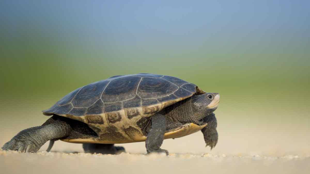 Variedades de tortuga en España