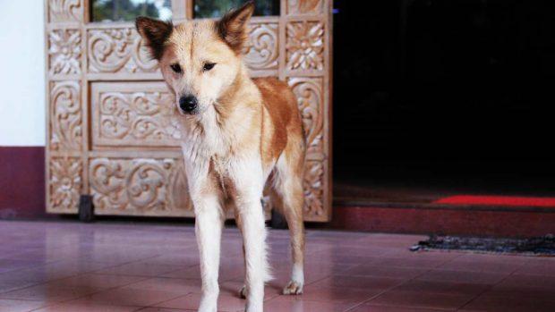Perro muy delgado