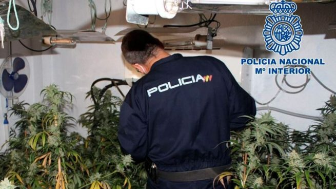 Los bomberos de Granada descubren una plantación de marihuana al apagar un incendio