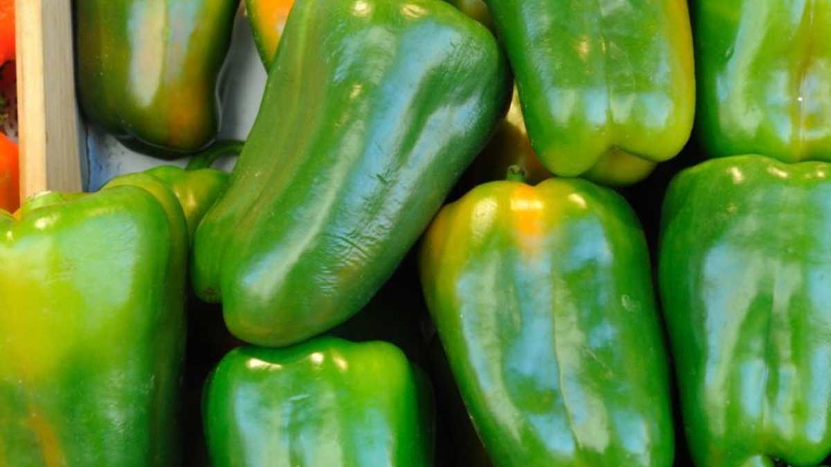 Receta de Pimientos verdes al horno