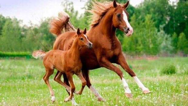 Reproducción en el caballo