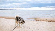 Los visitantes deberán caminar varios kilómetros si quieren disfrutar de las playas de la localidad