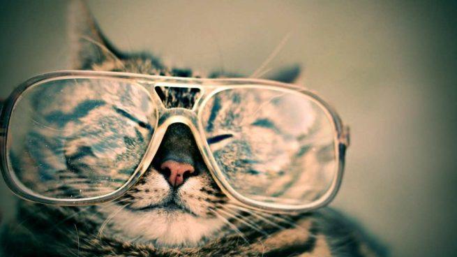 Prevenir ceguera en gato