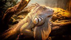 Especies de reptiles y su supervivencia