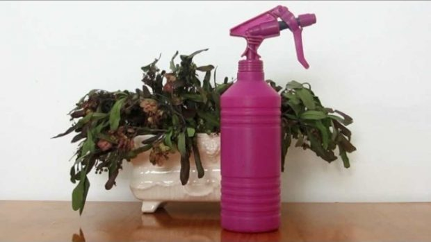 Insecticida casero