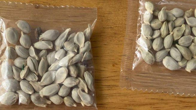 Estadounidenses están recibiendo paquetes con semillas de China