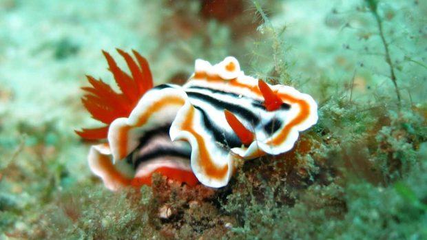 Los: nudibranquios