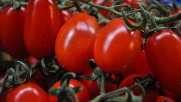 Piel de tomate