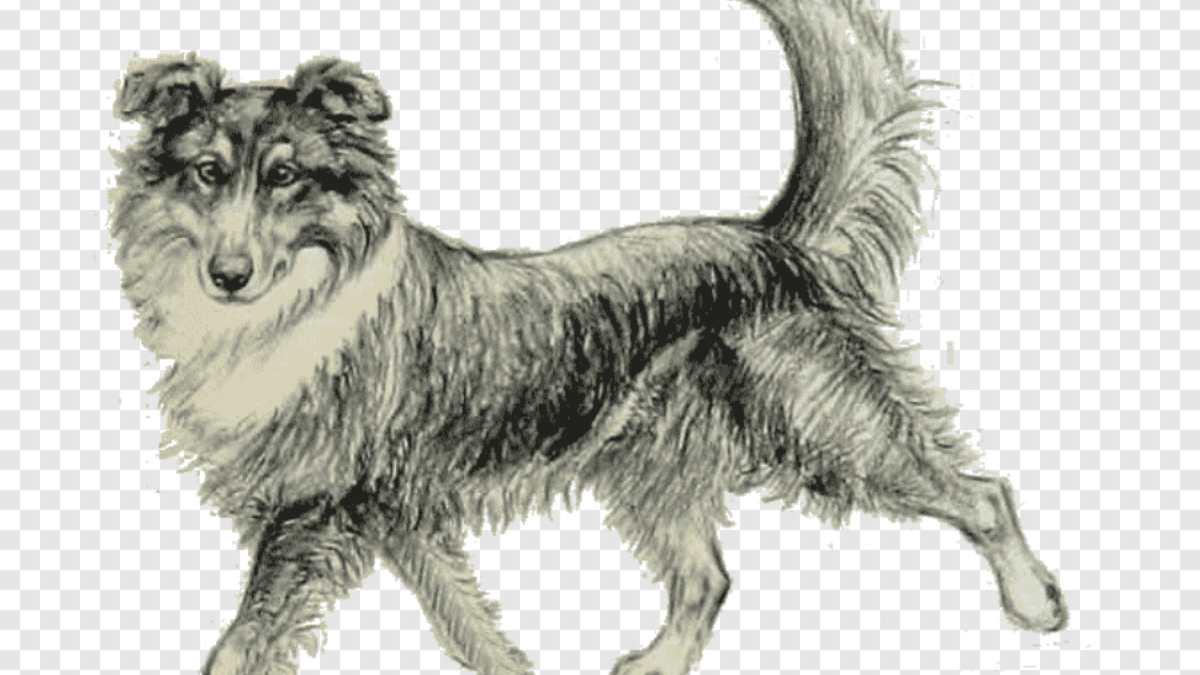 Razas de perros que existieron