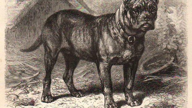 Perros que existieron