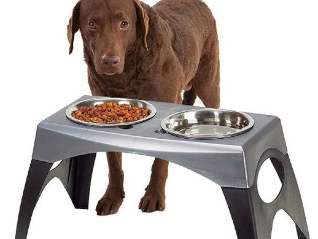 Comederos altos en perros