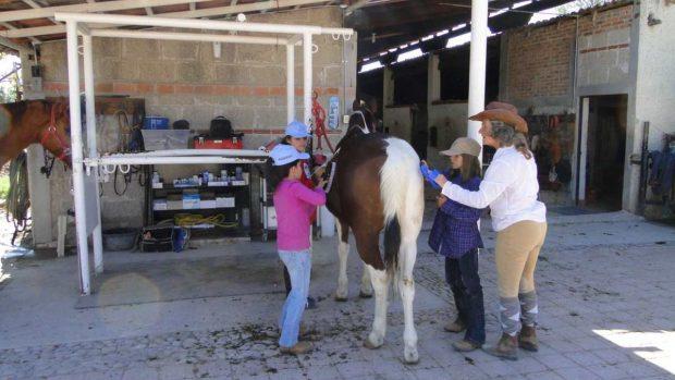 Alergia a caballo
