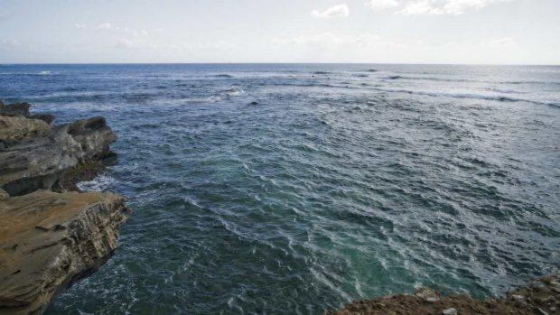 Corrientes oceánicas fauna