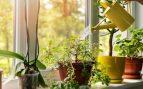 plantas purificar aire casa