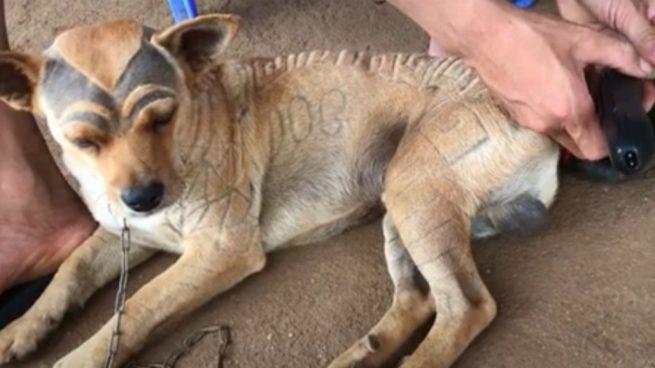 YouTube: Le corta el pelo a su perro y acaba acusado de maltrato animal