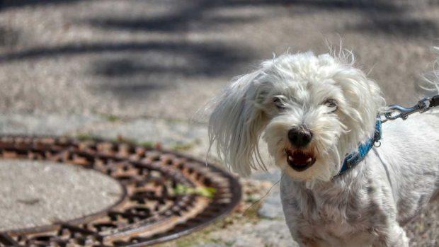 Dependencia emocional en perro
