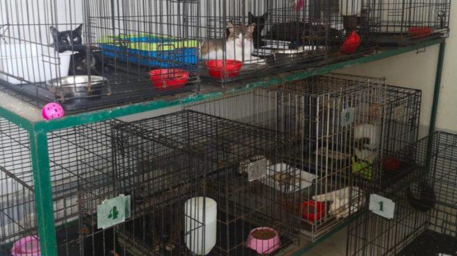 El PP denuncia el maltrato animal del socialista Juan Espadas en las gateras municipales de Sevilla
