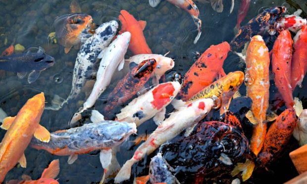 Colores peces