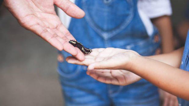 """El niño tiene miedo a los insectos ¿qué hacer"""""""