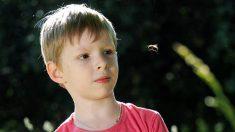 Cómo lidiar con el miedo de los niños a los insectos