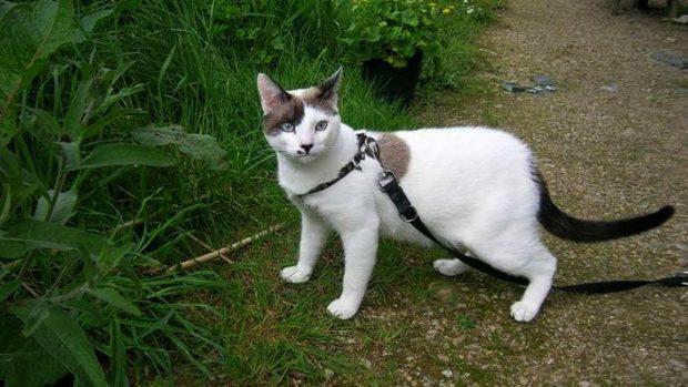 Paseo con gato con correa