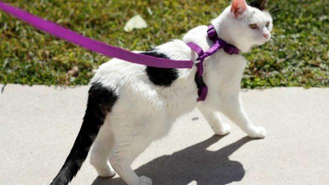 Paseos con gato