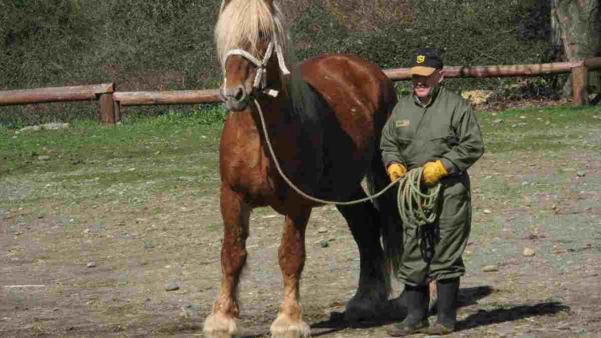 Razasa de caballos: el de Estonia