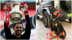 Mikel Arteta se compra un perro gurdián por 22.000 euros.