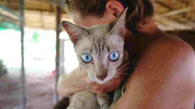 Síntomas gato enfermo