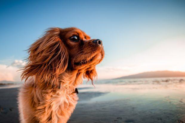 De playa con tu perro