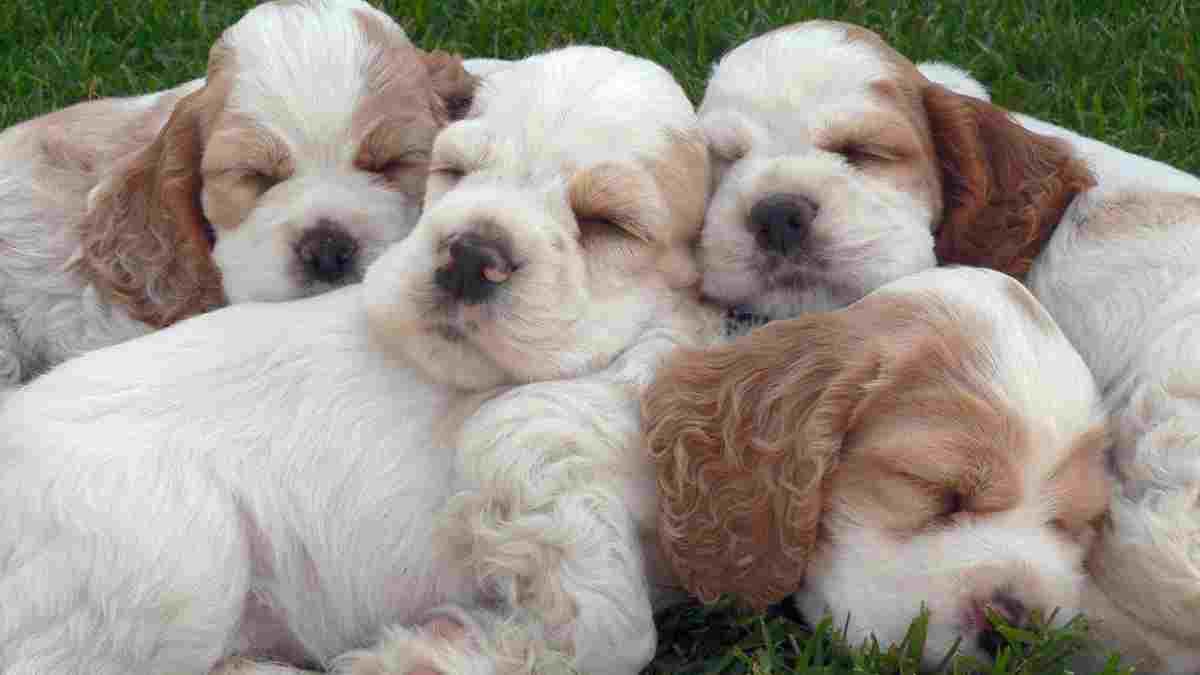 Cachorros rechazados por perra, ¿qué debemos hacer?
