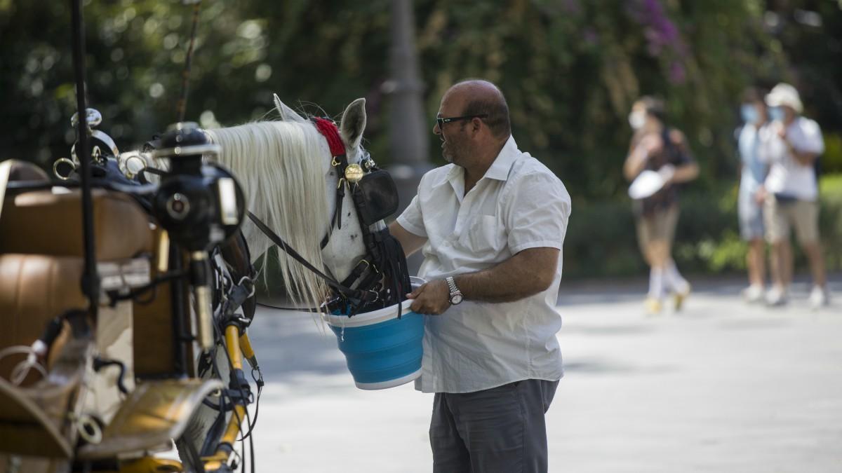 Un cochero da agua a su caballo en Sevilla durante la ola de calor africano que ha llegado este jueves a España.