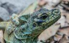 Ojos de los reptiles
