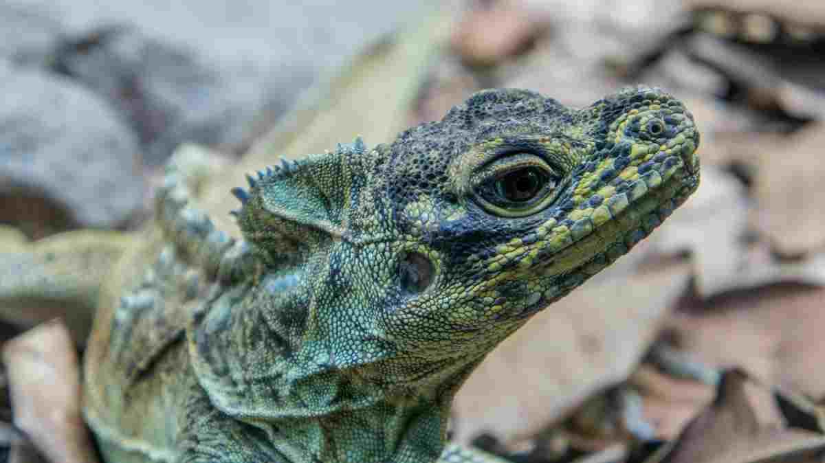 ¿Cómo es la visión del reptil?