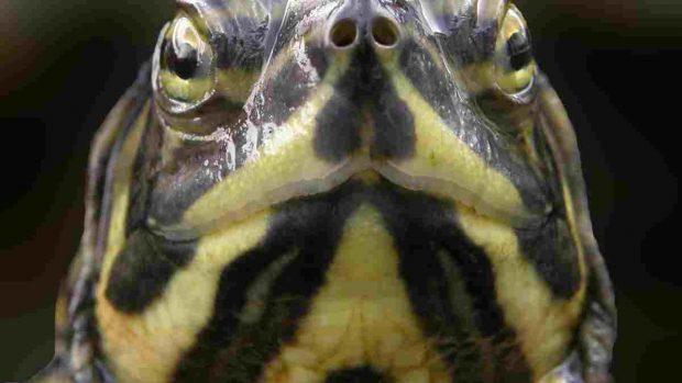 ¿Cómo ven los reptiles?