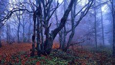 Tristeza y melancolía en otoño