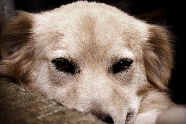 Pancreatitis en tu mascota