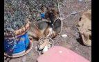 Matan a un perro por asfixia tras atarle y amordazarle con cinta aislante en una finca de Teguise