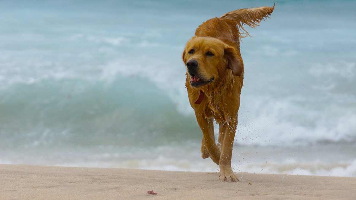 Playas que permiten perros