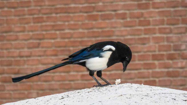 Pájaro en la ciudad